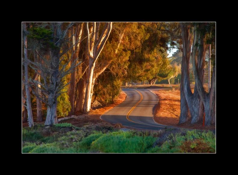 4-17-14 Winding Road Morro Bay.2