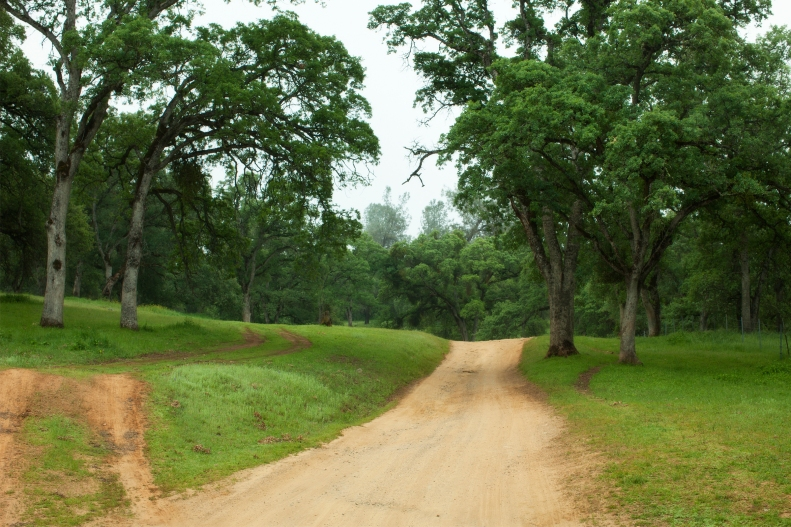 Dirt road leading to the trail head.