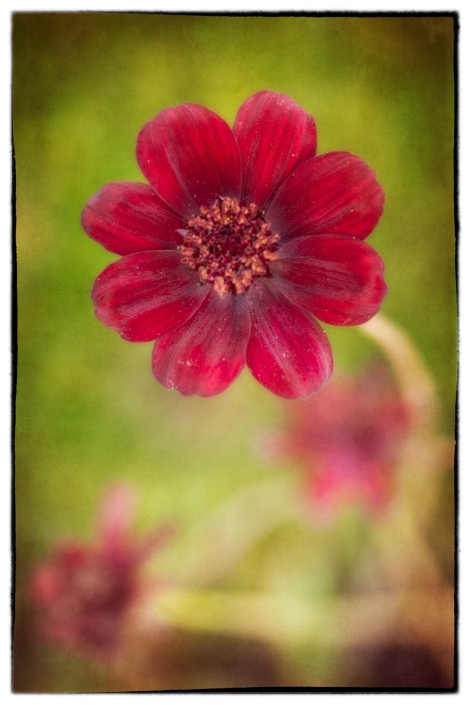 6-12-14 Flower