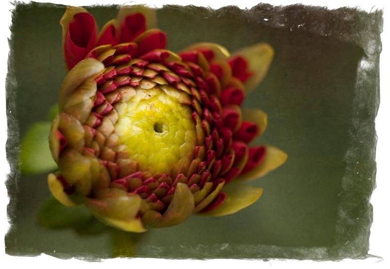 8-7-14 Flower