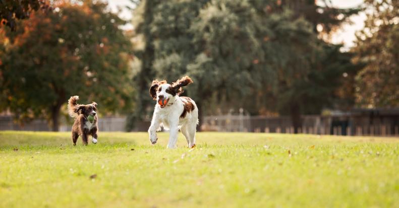11-17-14 Buster & Kari
