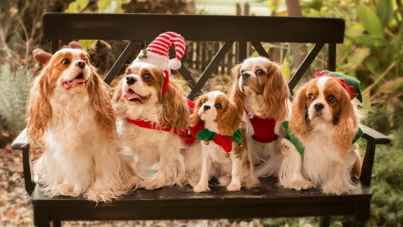 11-27-14 Chirstmas Dogs