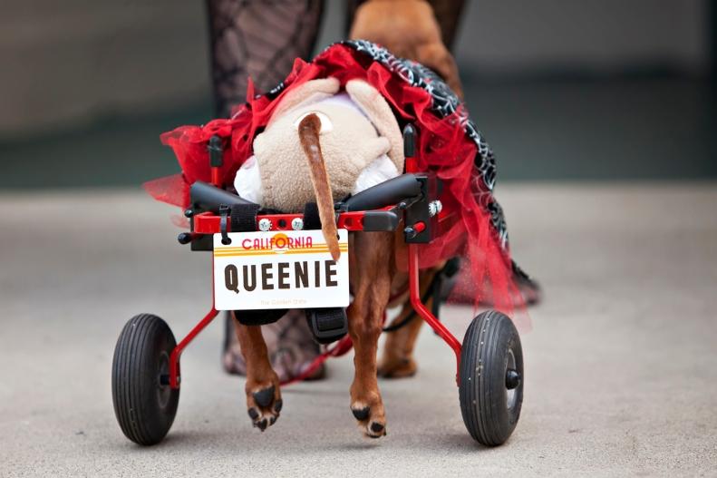 11-3-14 Queenie 4