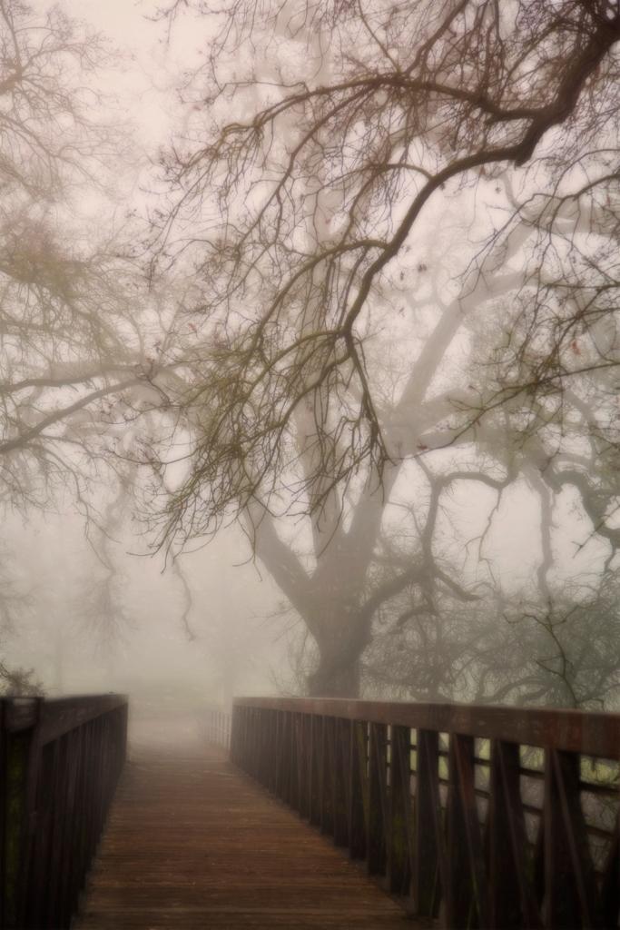 1-15-14 fog 4