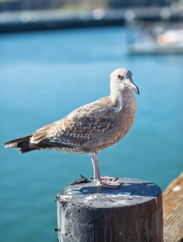 It wouldn't be a day at the beach without a picture of a bird on a poop covered post!
