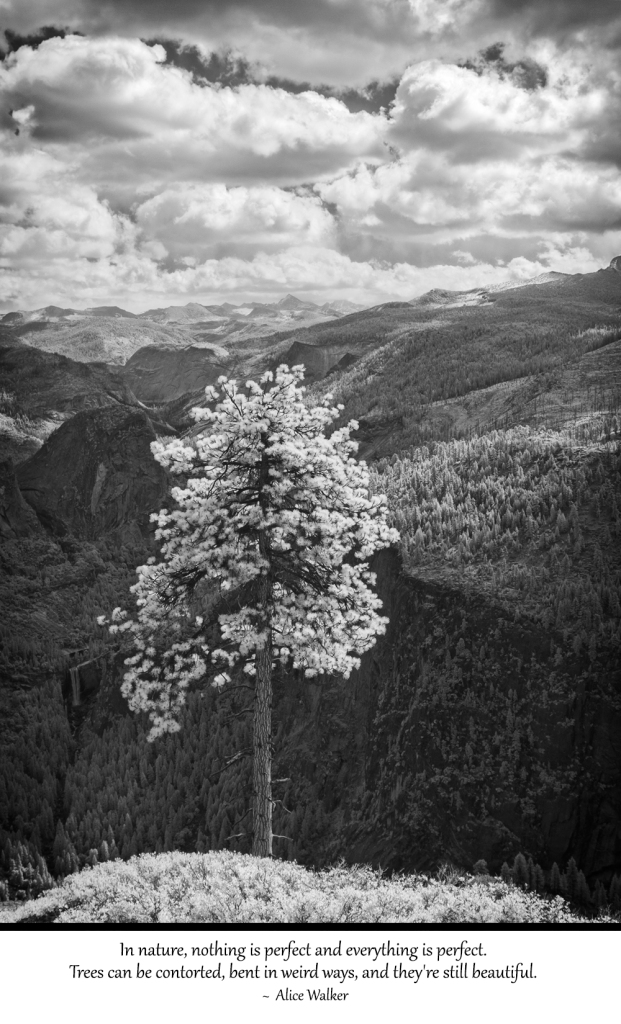 4-8-15 Yosemite Quotes 1