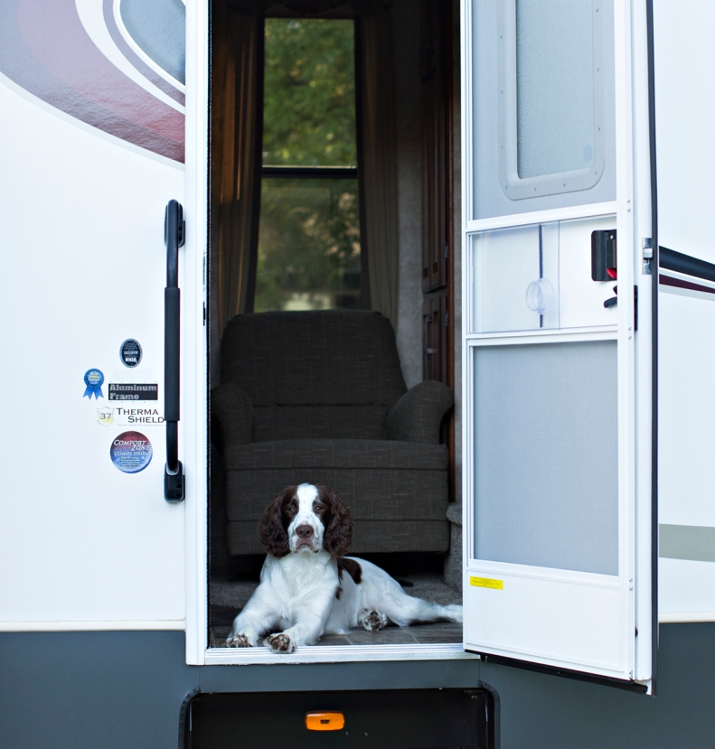 6-2-15 Buster in RV