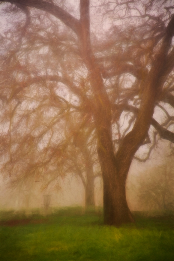 9-18-15 Tree in Fog