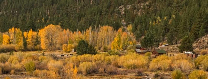 Levitt Meadow hike 2014