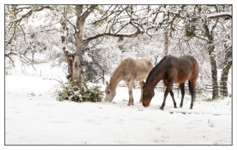 12-24-15 Joyce's Horses