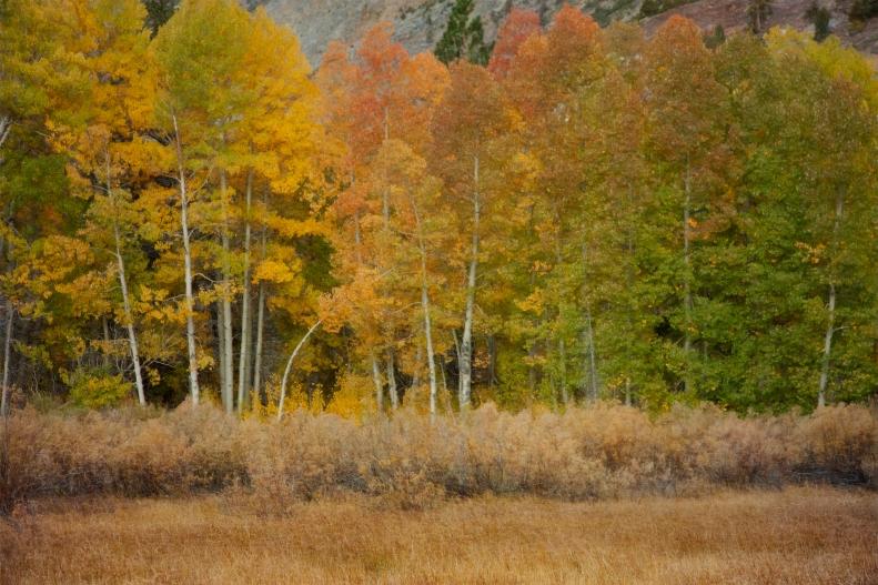9-22-16-e-s-fall-trees