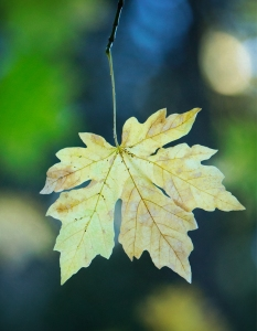 9-22-16-fall-leaf