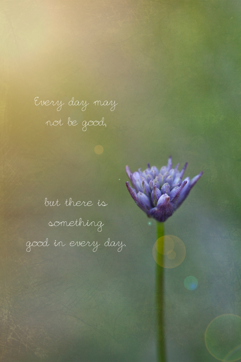 3-31-17 Flower & Quote