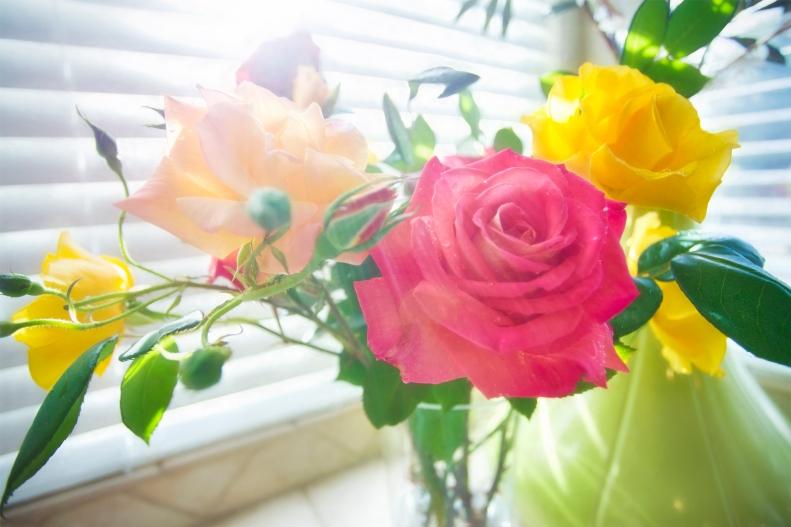 4-10-17 Roses 2