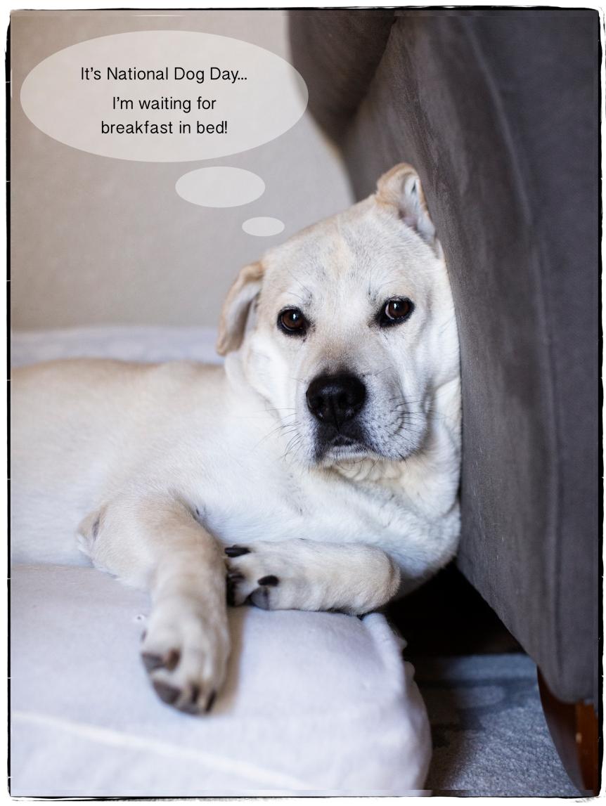 8-26-17 Dog Day
