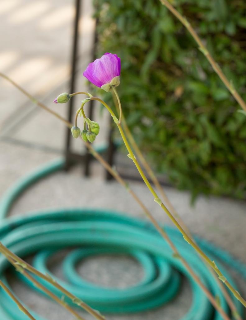 5-2-18 Flower w-hose