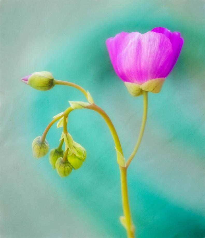 5-2-18 Flower