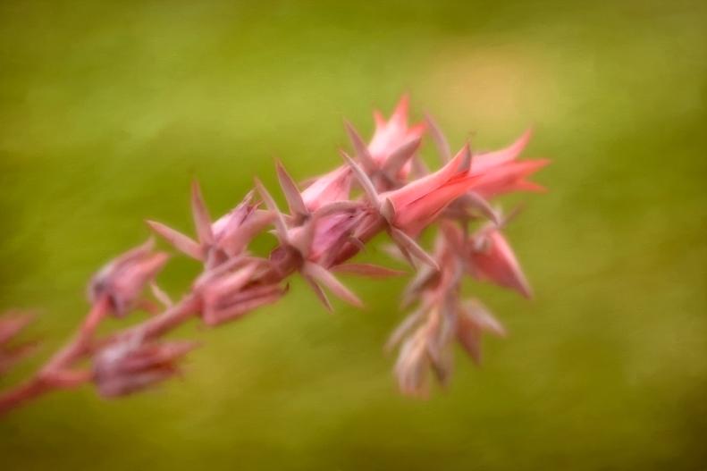 5-10-18 Cactus flower