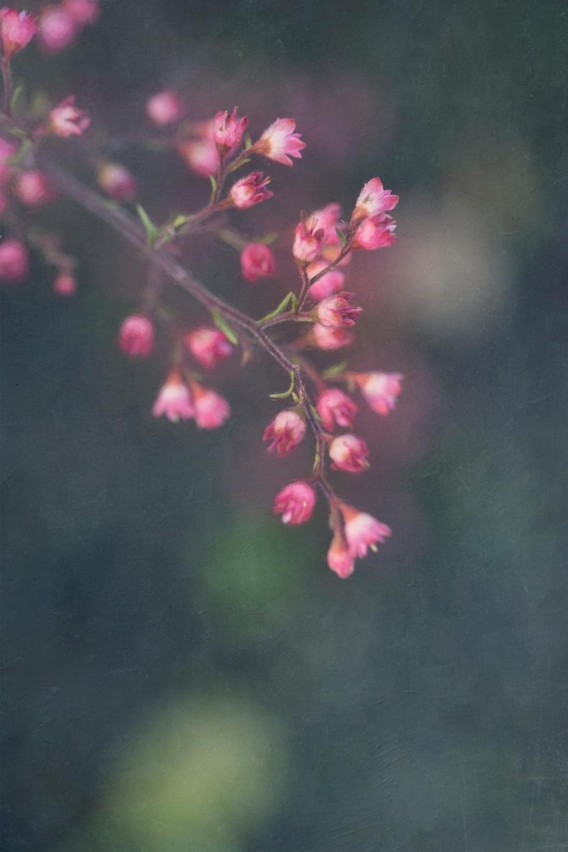 5-10-18 Pink Flower
