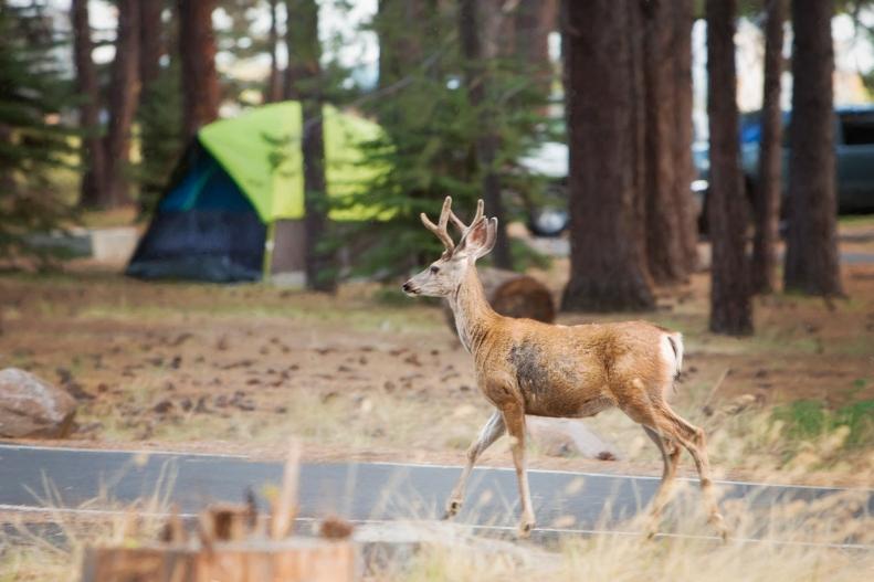 9-11-19 Deer 1